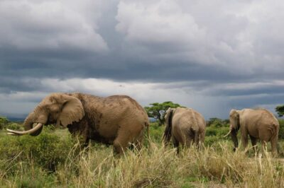 1 day tour in Amboseli National Park