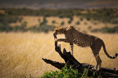 3 Days Masai Mara Adventure