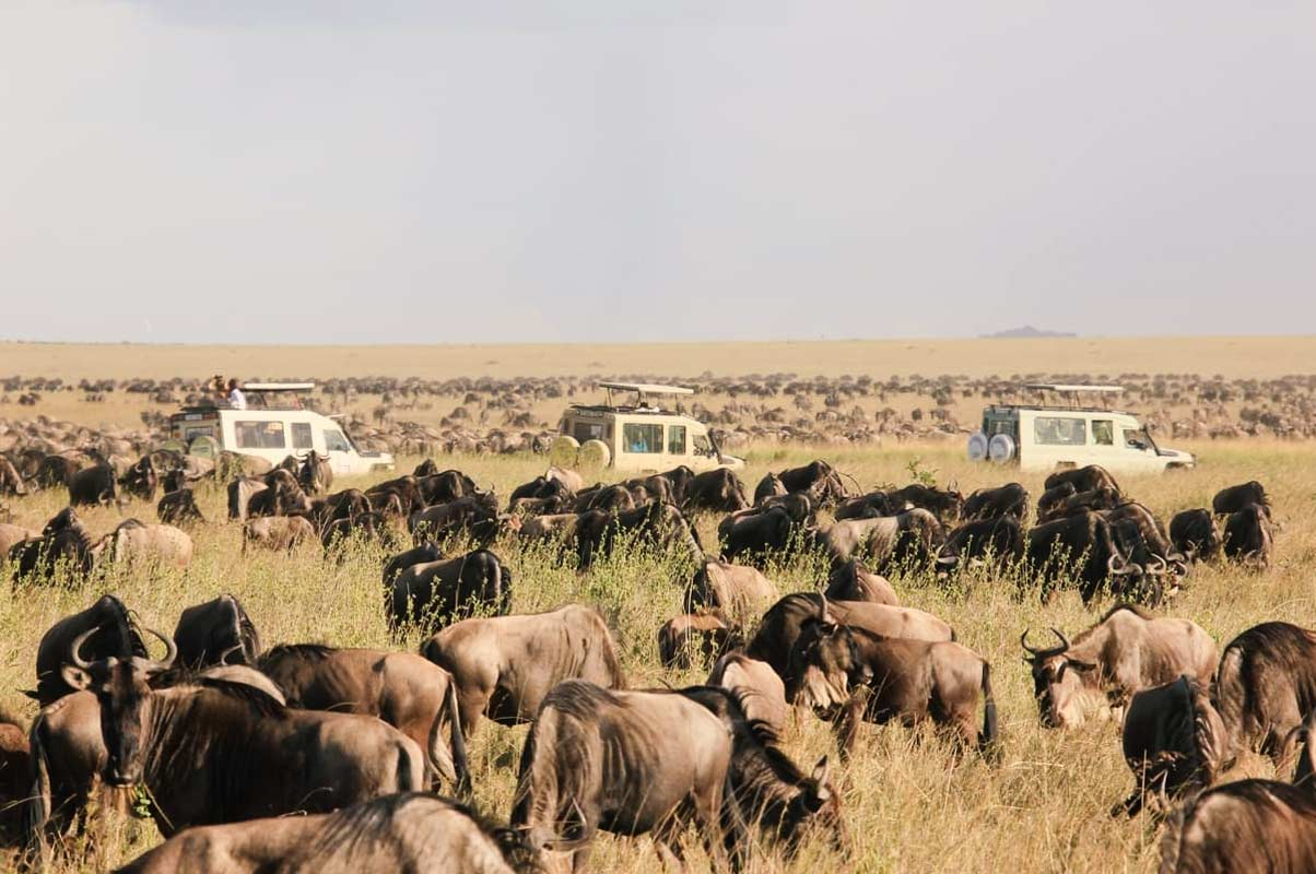 4 Days Sensational Safari